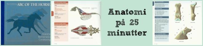 Anatomi på 25 min